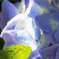 azuleverde